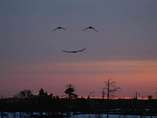 sky-smile1