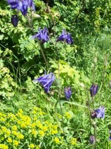 Blütenpracht auf der Schwäbischen Alb