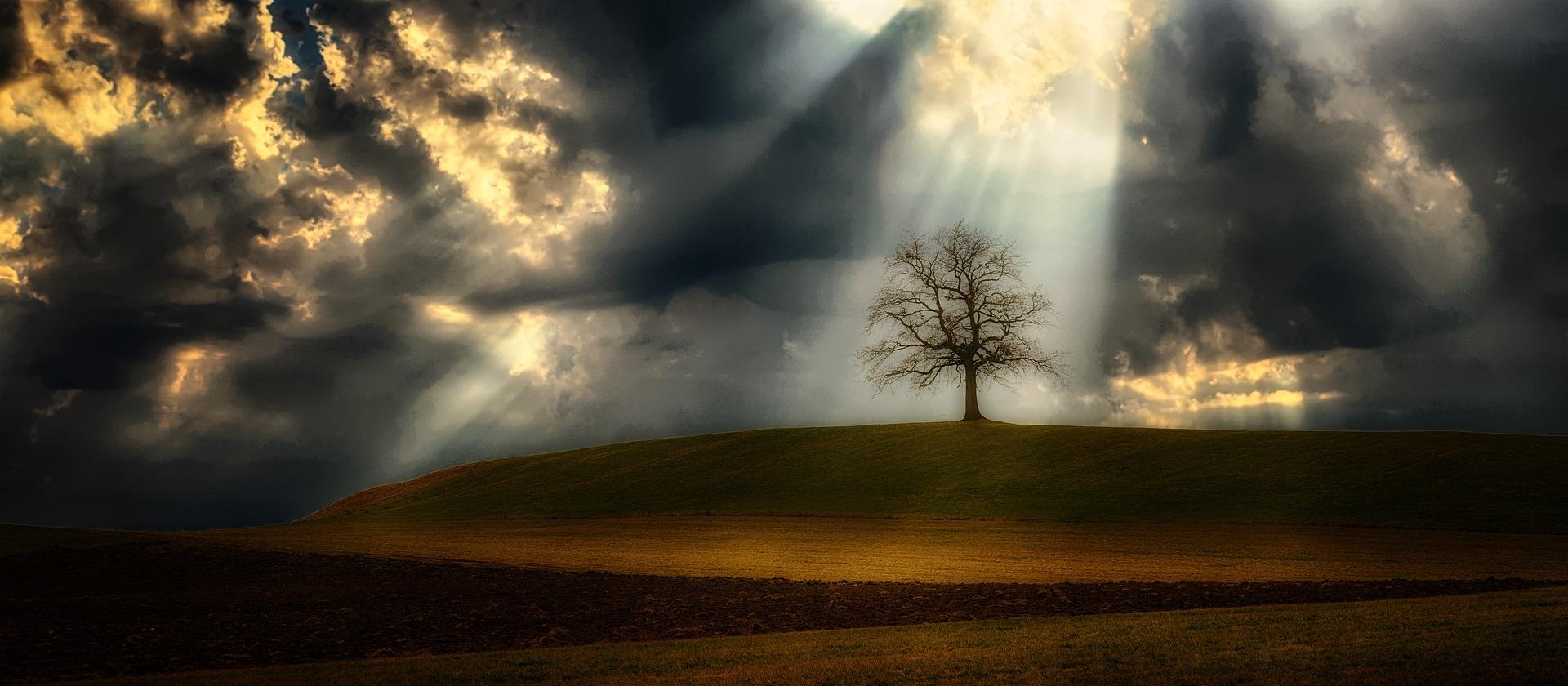 Baum vor Gewitterhimmel
