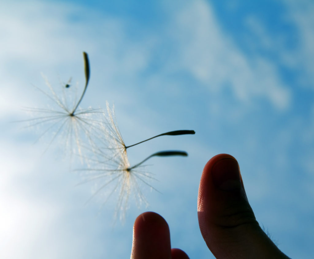 Pusteblume: Loslassen lernen